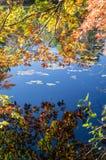Niebieskie niebo odbijający na spokojnym stawie Zdjęcia Royalty Free