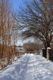 Niebieskie niebo przez drzew Zdjęcie Royalty Free