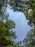 Niebieskie niebo przez drzewnego baldachimu zdjęcie royalty free