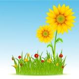 niebieskie niebo słonecznik royalty ilustracja