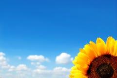 niebieskie niebo słonecznik Obrazy Royalty Free