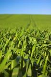 niebieskie niebo trawy obraz stock