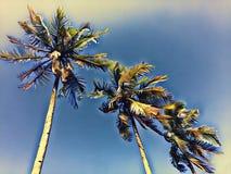 Niebieskie niebo widok z coco drzewkami palmowymi Egzotyczny wyspa rocznika wizerunek Zdjęcie Stock