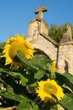 niebieskie niebo winnica Zdjęcie Royalty Free