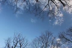 Niebieskie niebo z chmurami obramiać drzewnymi gałązkami obrazy stock