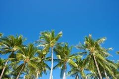 Niebieskie niebo z drzewkami palmowymi w Boracay Obrazy Royalty Free