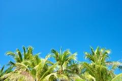 Niebieskie niebo z drzewkami palmowymi w Boracay Obraz Royalty Free