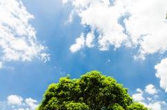 Niebieskie niebo z drzewnym i chmurnym Zdjęcie Royalty Free