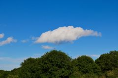 Niebieskie niebo z few chmury nad ciemnozielonymi drzewami obraz stock