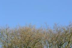Niebieskie niebo z gałąź Zdjęcia Royalty Free