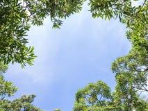 Niebieskie niebo z gałąź tłem Obrazy Stock
