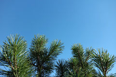 Niebieskie niebo z liśćmi Obrazy Royalty Free