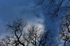 Niebieskie Niebo z Mosiac drzewami Zdjęcia Royalty Free