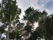 Niebieskie Niebo z zielonym drzewem Fotografia Royalty Free