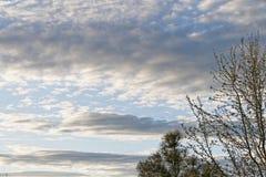 Niebieskie niebo z zmrok drzewami i chmurami Zdjęcia Stock