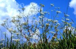 Niebieskie niebo zakrywa z gęstymi chmurami Rośliny czekają burzę Obrazy Stock