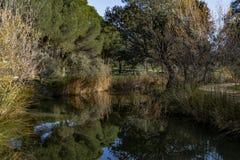 Niebieskie niebo, zieleni drzewa i strumienie woda, obraz stock