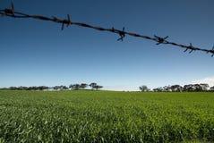 Niebieskie Niebo zieleni pola drut kolczasty Zdjęcia Stock