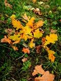 niebieskie oczy, piaskowe liście jesienią Obrazy Royalty Free
