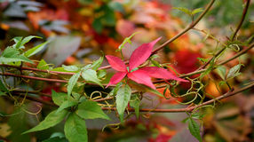 niebieskie oczy, piaskowe liście jesienią Zdjęcie Stock