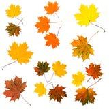 niebieskie oczy, piaskowe liście jesienią Fotografia Stock