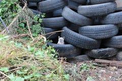 Niebieskie oko kot w trye Obraz Royalty Free