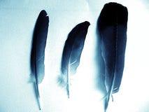 niebieskie pióra Obrazy Stock