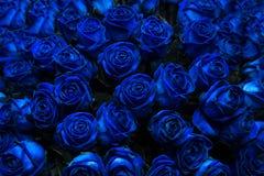 niebieskie róże Zdjęcie Royalty Free