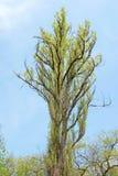niebieskiego nieba drzewo Zdjęcie Stock
