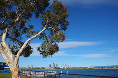 niebieskiego nieba drzewo Obrazy Stock