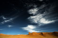 niebieskiego nieba drzewo obraz stock