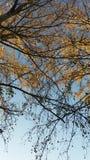 niebieskiego nieba drzewo Obrazy Royalty Free