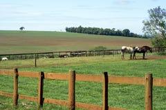 Niebieskiego nieba gospodarstwo rolne Obrazy Stock