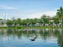 Niebieskiego nieba i drzewa palma jest w miasto parku fotografia stock