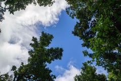 Niebieskiego nieba i zieleni treetops Gran Canaria, wyspy kanaryjska maszerujący zdjęcia stock