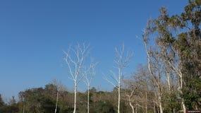 Niebieskiego nieba tła drzewny Sezonowy materiał fotografia stock
