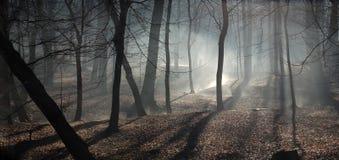 Niebla foto de archivo
