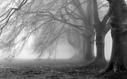 niebla fotografía de archivo libre de regalías
