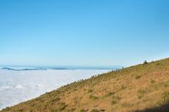 Niebla amarilla y blanca del prado Imagen de archivo libre de regalías