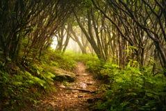 Niebla apalache de la pista de senderismo de los jardines escarpados fantasmagórica Imágenes de archivo libres de regalías
