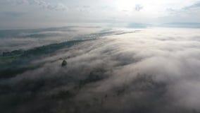 Niebla asombrosa sobre el bosque almacen de video