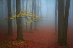 Niebla azul y un árbol con las hojas del amarillo en el bosque Imagen de archivo