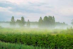 Niebla bajo paisaje rural Rusia del prado Foto de archivo