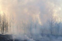 Niebla con humo en incendio forestal Imagen de archivo