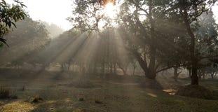 Niebla con humo y luz del sol por la mañana imagenes de archivo