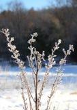 Niebla congelada en una planta del invierno fotos de archivo