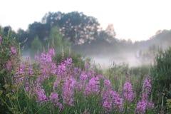 Niebla de la flor de la puesta del sol Foto de archivo