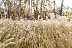 Niebla de la hierba y la luz del sol de la mañana Foto de archivo libre de regalías