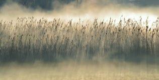 Niebla de la mañana…. Imágenes de archivo libres de regalías