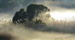 Niebla de la mañana…. Imagenes de archivo